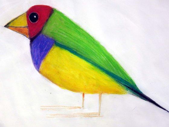 Bird - Gould finch