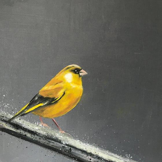Greenfinch on Silver Branch