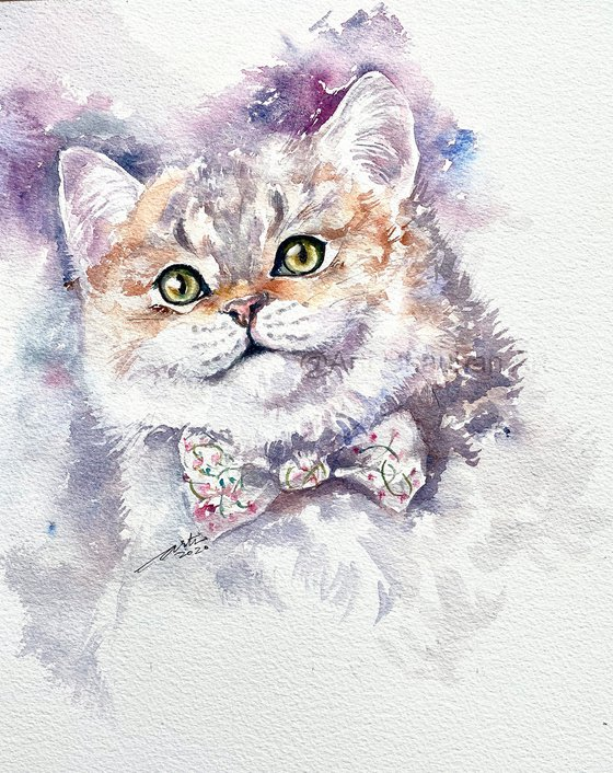 A Cat named Lily