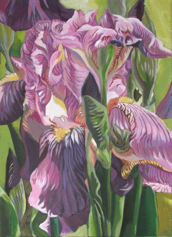 pink iris acrylic floral