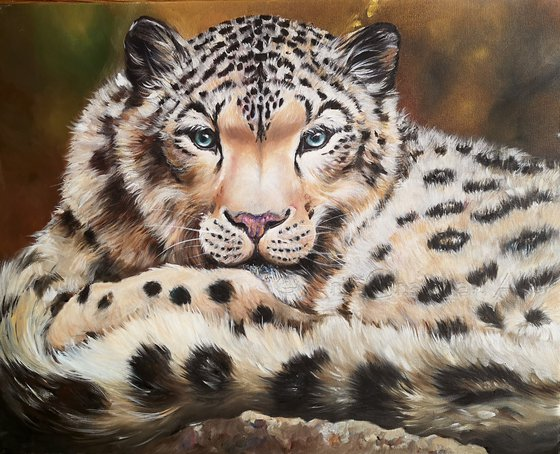 Kingley the Snow Leopard