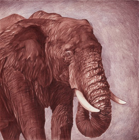 Elephant (Ballpoint Pen Drawing)