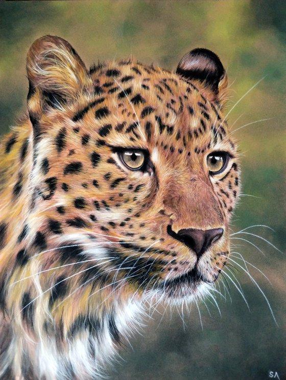 Leopards Gaze V (Original Painting)