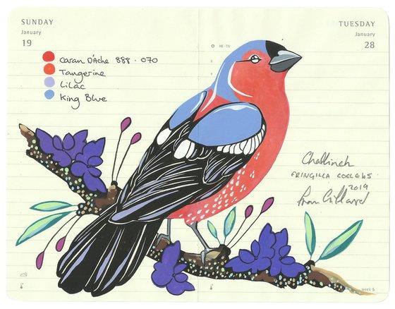 Birds of Europe: Chaffinch