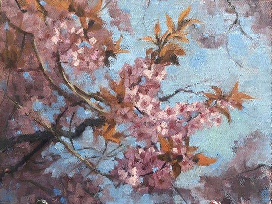 Cherry blossom tangle