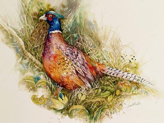 Pheasant Phillip