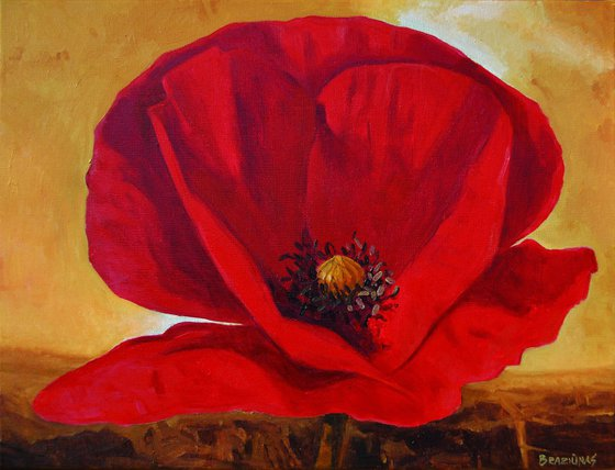 poppy, floral oil painting