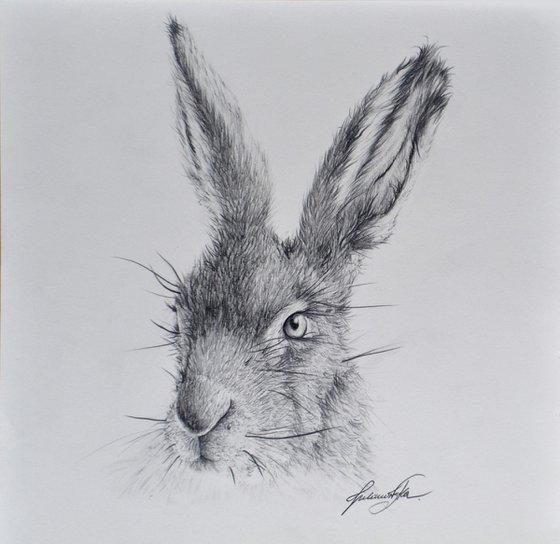 Hare #3
