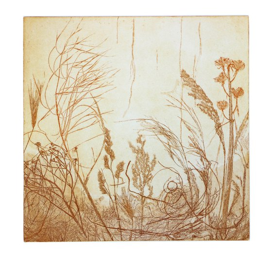 """Heike Roesel """"Grasses"""", fine art etching in variation, edition of 10"""