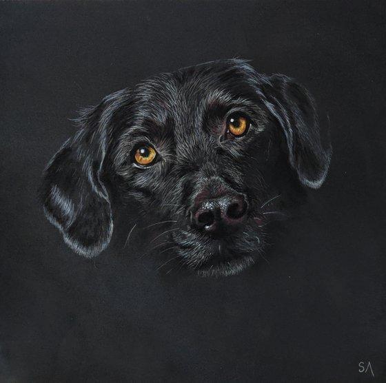 """Patiently Waiting""     Black Labrador portrait (Original Painting)"