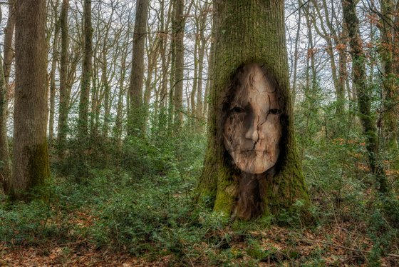The hidden inhabitants of the forest