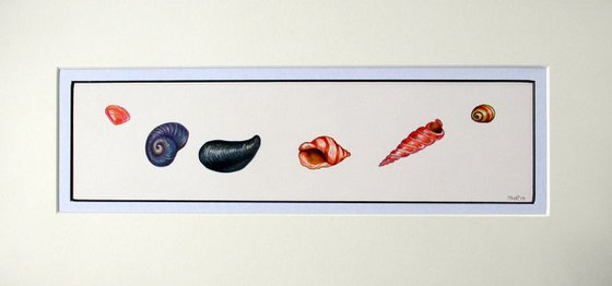 'Ocean Jewels'