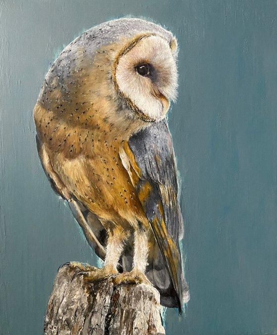 Turquoise Barn Owl