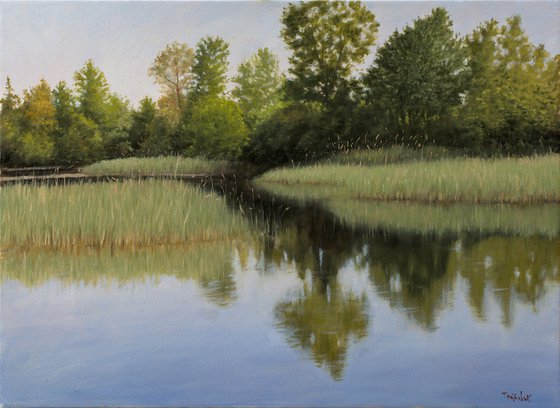 Bulrush Swamp
