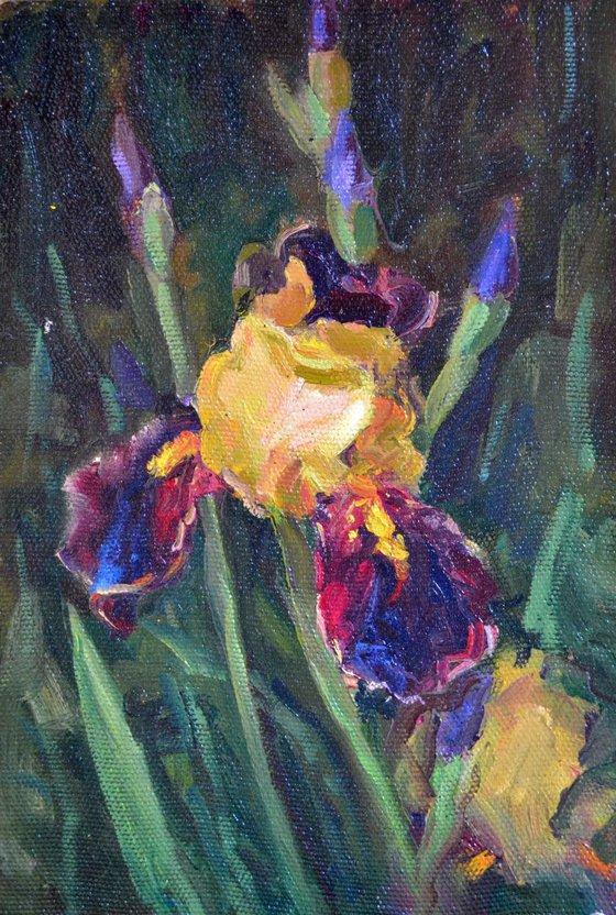 The iris flower