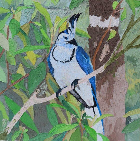 Sing me, Bird 25 X 25 cm
