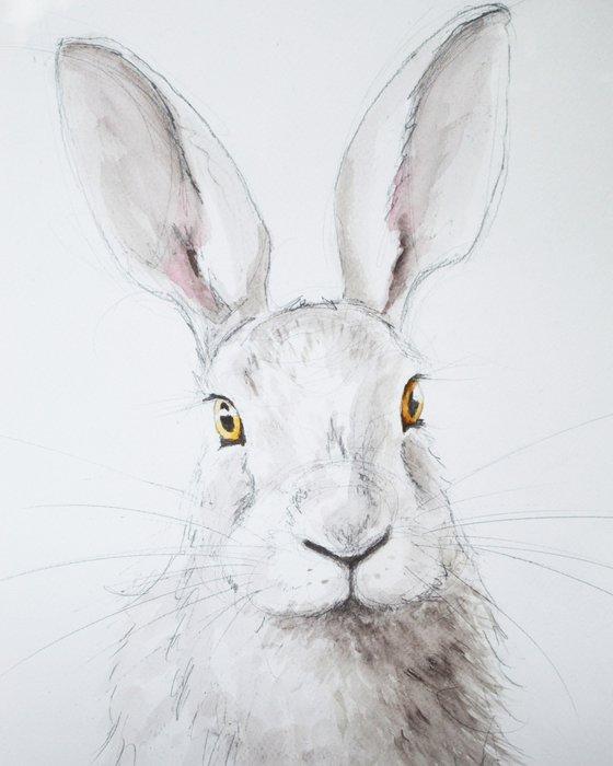 Hare surprise