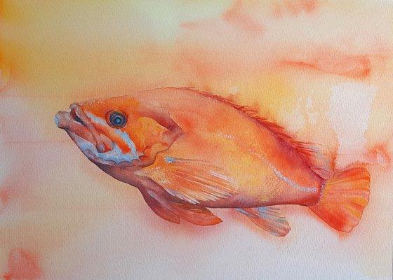 Orange Watercolour Fish - large original rockfish painting