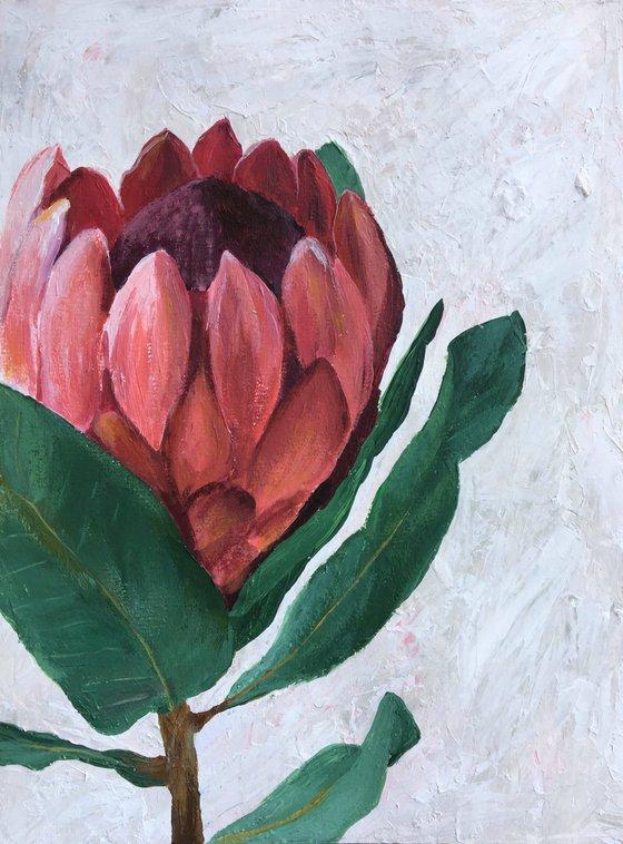 Protea The Beauty