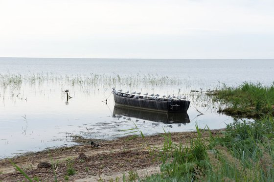 Photography | Seagulls boat