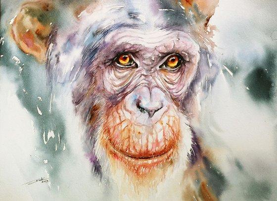 Rebus the Chimpanzee