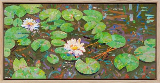 Tasman Lily Pond 47