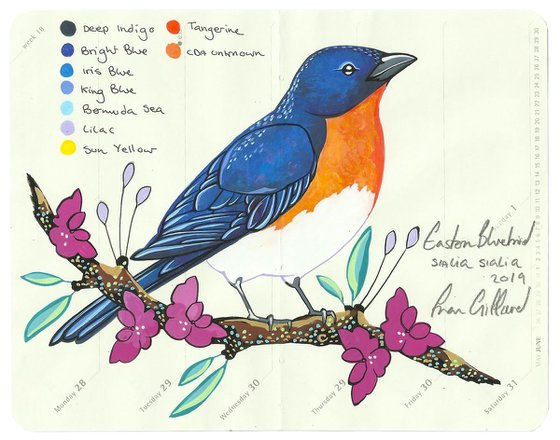 Birds of North America: Bluebird
