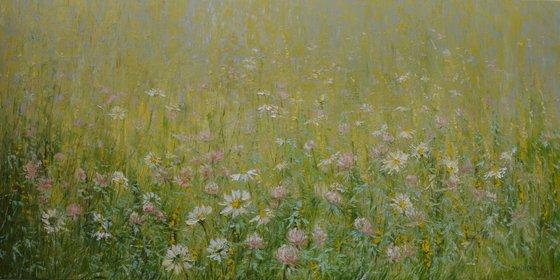 Clover Flowers Meadow
