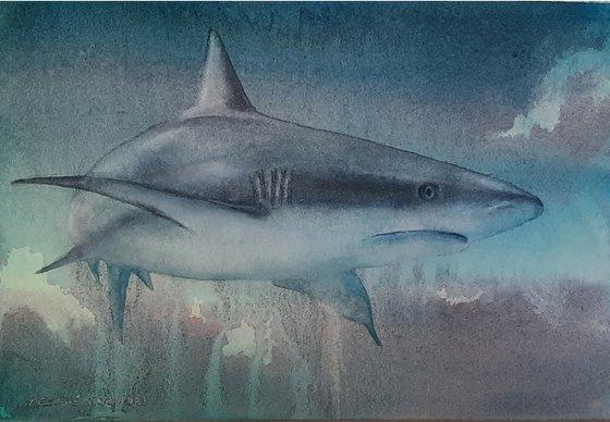 Original Watercolour Shark Painting