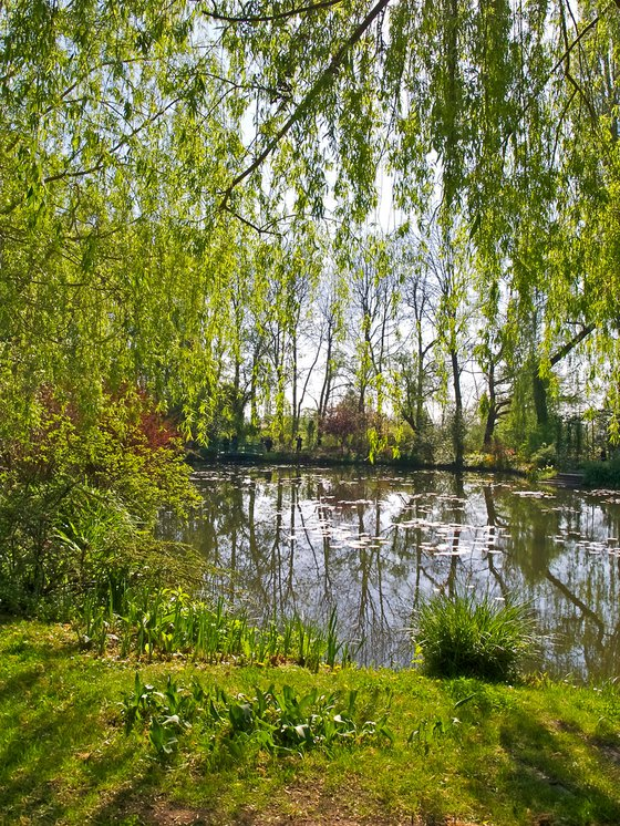 Giverny Willows