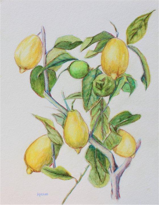 Lemon Tree IV
