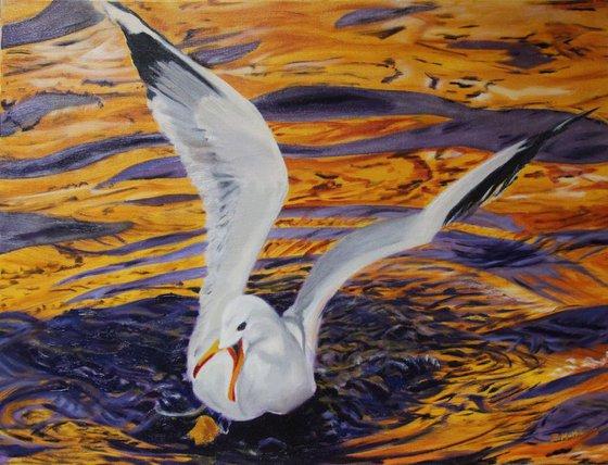 Silvery Gull