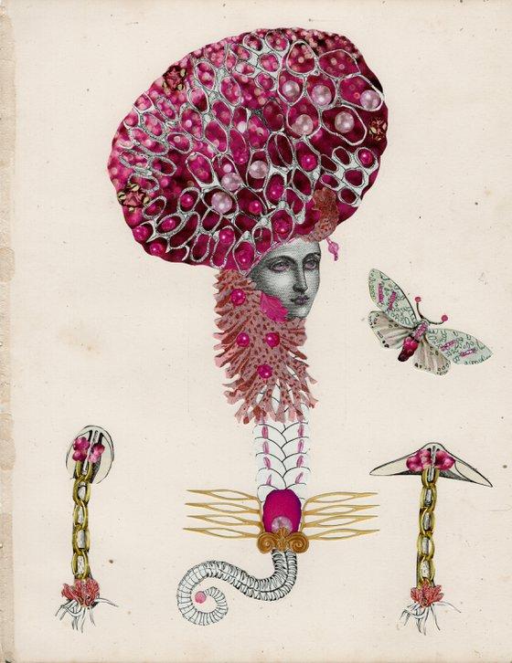 Pink Disco Fungus (Aleurodiscus wakefieldiae)