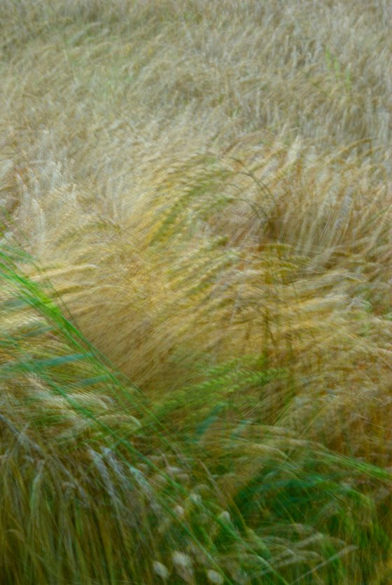 Barley, impressionist abstract country landscape