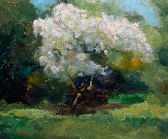 Impressionist oil painting Flowering Trees in Paris Park