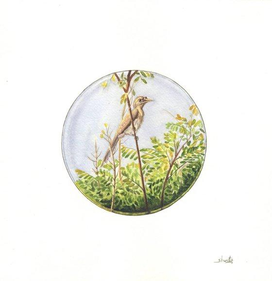 Indian Grey Hornbill Watercolour Painting