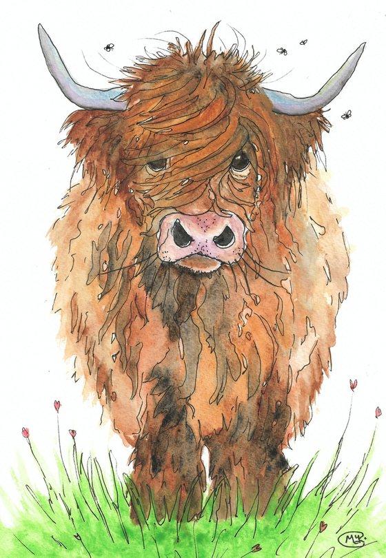 Big Hairy Cow. Scottish Highland Cow