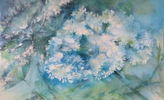 Queen Anne's Lace, Original floral watercolour