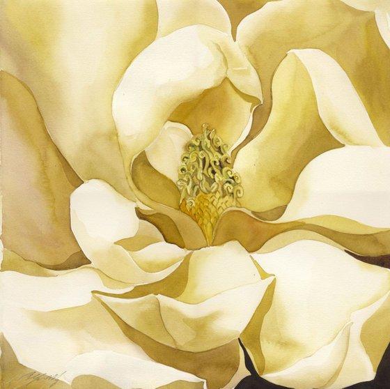 magnolia in yellow