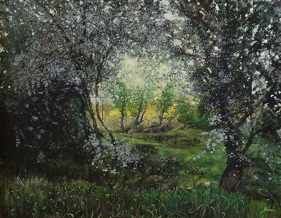 Flowering blackthorn