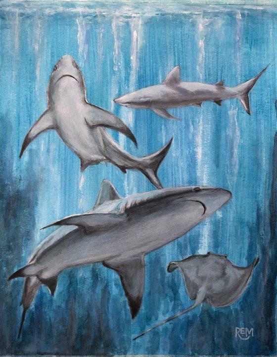 Shark Ballet