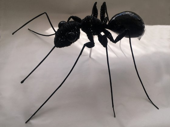 ANT-AGONISM
