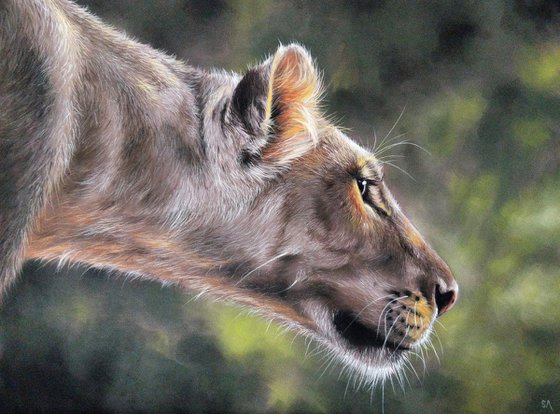 Lions Gaze III (Original Painting)