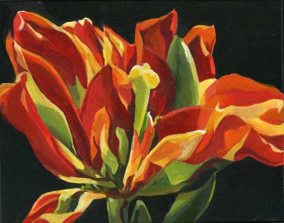 spring tulip acrylic floral