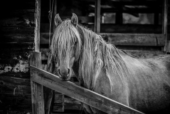 Close up of a pretty horse.
