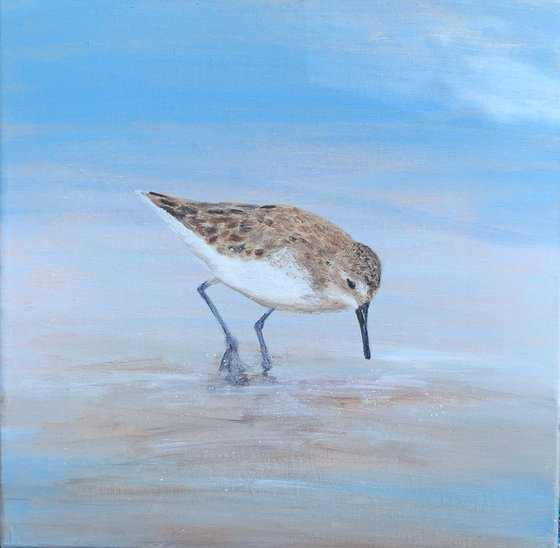 Young Sandpiper At The Beach