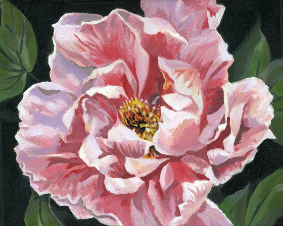 pink peony acrylic floral