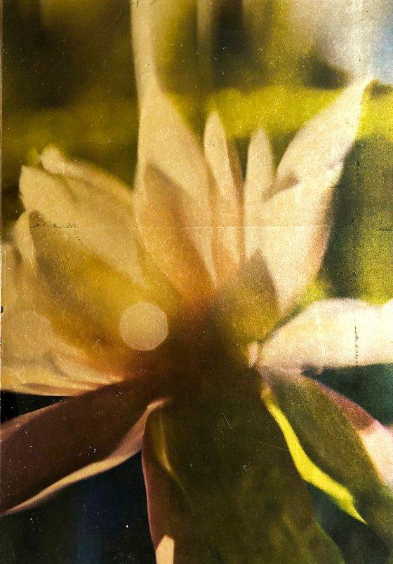 waterlilies ix