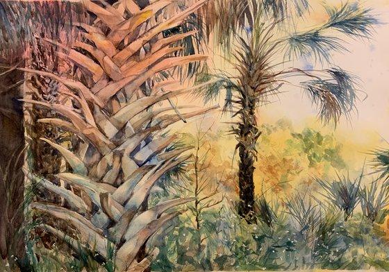 Native Florida