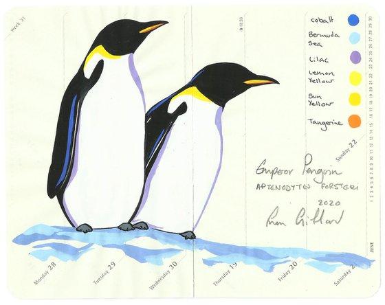Birds of Antarctica: Emperor Penguin